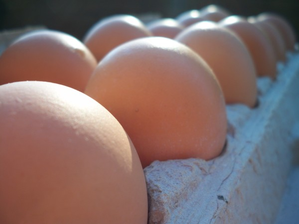 An Egg-celent Source of Protein and More | Positively Healthy