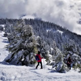 snowshoers taking different paths